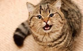 Кот метит что делать кастрировать