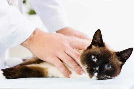 Почему у кота хпн