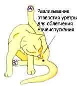 Лекарство от мочекаменной болезни у котов