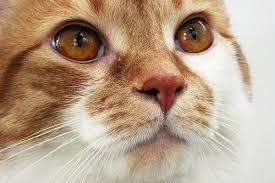 У кота насморк вылечить в домашних условиях 67